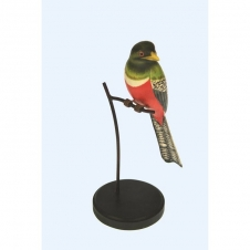 Vogel mit Schwanz und weißer Brust